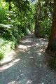 Waren es 200 oder gar 300, ich wusste es nicht! Auf jeden Fall hatte ich das Ende erreicht und der Stufenweg wich einem breiten Fahrweg.
