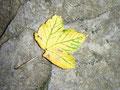 Der Herbst ist schon im Anmarsch!