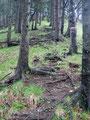 Über unzählige, durch die Nässe rutschigen Wurzeln führte der Steig nun immer steiler werdend in der Direttissima bergwärts.