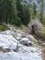 …bevor der Steig über Felsplatten und Wurzeln in die Brennerriesen abfiel.