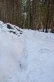"""... folgte meinen hinterlassenen Fußabdrücken im """"Baumstammslalom"""" zurück in Richtung Ausgangspunkt."""