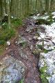 Das Kriterium dieses Steiges waren vor allem die vielen nassen Wurzeln. Und der Schnee setzte bei dieser Rutschpartie noch eines obendrauf.