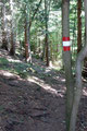 … rechts ein Steig abwärts in einen Waldhang einbog.