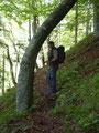 … den mit Buchen bewaldeten Rücken empor.