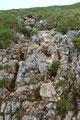 … darauf folgend abgespeckte Felsstufen durch Schroffengelände in eine Einsattelung nach oben.  Trittsicherheit war Voraussetzung bei dieser durch Regen verursachten einzigen Rutschpartie.