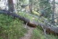 Wie so oft bei unseren Ausflügen in die Berge trafen wir auch hier auf umgefallene Baumstämme die von Sturmschäden herrühren.  Jedoch hatten die verantwortlichen Wegewarte ganze Arbeit geleistet.