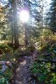 … weiter entlang des Steiges durch den Wald, dann über den oberen und unteren Koderboden talwärts.