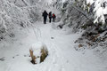 """Mit jedem zunehmenden Höhenmeter erhöhte sich auch die Schicht der weißen Pracht. In einem leichten Rechtsbogen folgte unsere Gruppe dem """"Grünau-Wanderweg"""" durch zauberhaften Winterwald höher."""