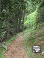 … anschließend wieder in den Wald eintauchte. Auch hier leuchtete mir das Dottergelb der Eierschwammerl schon entgegen. Eine Pause war angesagt – pflücken stand am Programm.