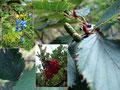 Vorbei an den Schönheiten von Mutter Natur ...