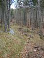 Sanft ansteigend führte mich der Waldsteig meinem Ziel näher.