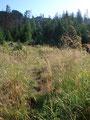 Geschafft ! Den Windwurf hinter uns gelassen, wurde der Weg wieder flacher und die Bergflora immer schöner. Man konnte in der Ferne bereits das Gipfelkreuz des Erlakogels sehen.