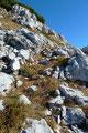 Am Fuße des Däumkogels verwehrte Margit den weiteren Aufstieg auf dessen Gipfel. Ergo – ihr kennt mich – machte ich mich alleine auf den unmarkierten Weg nach oben.