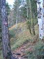 In Serpentinen über Holzstufen führt uns der Weg unserem Ziel näher