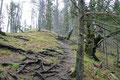 """Der """"Wurzelsteig"""" steilte nunmehr etwas an und zog sich über einen breiten Rücken durch schönen Mischwald weiter bergwärts."""
