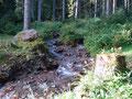 Zwischendurch immer wieder mit kleinen Sammelstopps wanderte ich weiter entlang des Bärenbaches durch den dunstigen Wald bergwärts.