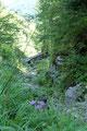 Diesem kontinuierlich abfallenden Waldsteig folgte ich zu einem kleinen Brücklein, übersetzte es und wanderte gemütlich weiter bis zur Einmündung in eine  Forststraße.