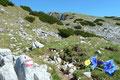 Nach der  netten abwechselungsreichen kleinen Klettereinlage  wanderte ich den leicht ansteigenden Pfad über die felsdurchsetzten Wiesenflächen gipfelwärts. Überall konnte man das leuchtende Blau der Enziane erkennen.