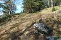 Im oberen Bereich des Waldhanges lichtete sich der Baumbestand etwas und …