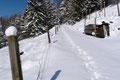 Das gleich hinter dem Hof befindliche Hinweisschild ließ uns nach links in den schneebedeckten Karrenweg abdrehen. Vorbei am Wildgehege steuerten wir geradewegs in westlicher Richtung dem Waldrand entgegen.