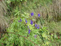 Auch Zeit für die Flora mußte sein.