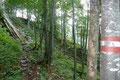 Wolferl und ich ließen uns keinesfalls von unserem Vorhaben abbringen und stiegen voller Elan den moderat ansteigenden rot-weiß-rot markierten Wandersteig, anfangs in Kehren über felsdurchsetztes Gelände, dann durch Baumbestand …