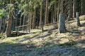 Über den nächsten Überstieg tauchte ich dann auch in den Wald unterhalb des Hochkogelgipfels ein.