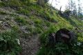 … die landesüblichen Markierungen nach links über eine Steilstufe zu …