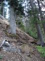 Über Stock und Stein, vielen Wurzeln ging es eher in der Direttissima talwärts.