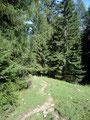 Der Wandersteig führte uns wieder in den Bergwald hinein.
