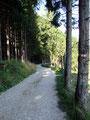 ... den Wildgehegerundweg. Die letzten Sonnenstrahlen des Tages begleiteten uns beim Rückmarsch.