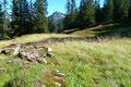 Eine kleine offene Fläche wurde erreicht, überquert und schon ging es wieder in den Wald hinein.
