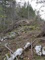 Leider hatte am Gipfelkamm der Sturm ganze Arbeit geleistet. Die Bäume lagen hier kreuz und quer.