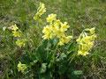 Vorbei an einer saftigen Blumenwiese ...