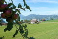 Nun zwischen Obstgärten von Apfel-, Birn- und Zwetschkenbestand  in Windungen und Kehren nach Südwesten nach Unterroith hinab und …