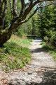 Einem saften Spazierweg folgte mitunter …