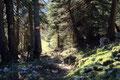 Zunächst mussten wir noch durch diesen klitzekleinen Bergwald hindurch …