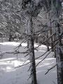 Je freiher die Fläche wurde, desto mehr wurde der Schnee.