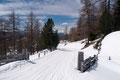 … schneebedeckten Forststraße hinunter, die …