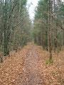 Mittlerweile hat es auch wieder aufgehört zu tröpfeln und ich eilte raschen Schrittes dem flach verlaufenden Waldweg Richtung Einstieg weiter.