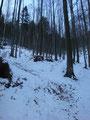 Weiter ging es in Serpentinen durch einen Mischwald mäßig steil nach oben, ...