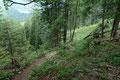Nachdem ich das Rinnsal überschritten hatte, zog sich der Wegverlauf in kurzen steilen Kehren durch bewaldetes Terrain zu …