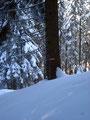 Raschen Schrittes ging es zurück Richtung Ausgangpunktes.  Mal durch den Wald, …