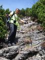 …  zwischendurch aber auch immer wieder Felsstufen, ging es auf einem stark abfallenden Latschenhang zum Walkerskogel  hinunter.