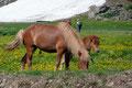Im Talboden der Felsarena angekommen, suchten wir noch ein lauschiges Platzerl zum Verweilen und fütterten und streichelten die Pferde, welche hier friedlich weideten.