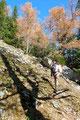Der Anstieg durchstreifte zunächst Latschenzonen und leitete anschließend in weiten Serpentinen, durch herbstlich bunt gefärbten lichten Waldbestand über den Ostrücken des Vorgipfels empor..