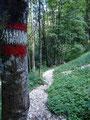 Im Anschluß daran folgten wir dem nett angelegten Steiglein durch den Wald ...