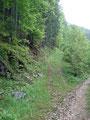 Frohen Mutes schritt ich weiter, traf wieder auf die Forststraße, der ich bis zur nächsten Abzweigung folgte. Ich bog ein weiteres Mal links ab und …