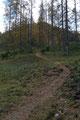 Nach der kurzen Steilstufe schlängelte sich der überaus gut markierte Weitwanderweg Nr. 09 etwas gemächlicher Richtung Bärenalm weiter.