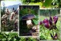Einige Eindrücke der Blütenpracht und Artenvielfalt entlang des Aufstiegsweges.